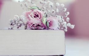 Картинка цветы, книга, бутоны