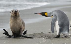 Картинка animals, nature, Other, penguin