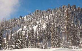 Картинка зима, небо, солнце, снег, деревья, гора, склон, Калифорния, США, Lassen Volcanic National Park