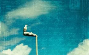 Обои небо, письмо, стиль, птица