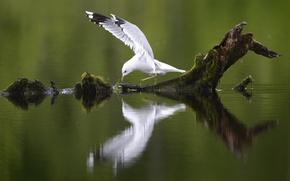 Картинка река, дерево, птица