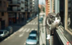 Картинка кошка, взгляд, город, улица