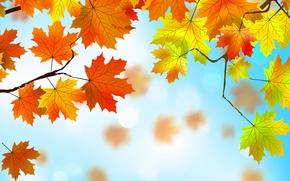 Картинка листья, фон, autumn, leaves, осенние, maple