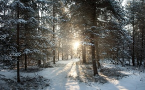 Картинка зима, снег, восход, Висконсин, United States, winter, Sunrise, Филлипс, Northern Woods, Phillips, Wisconsin