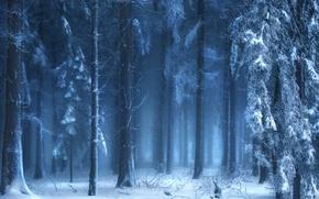 Картинка зима, лес, природа, туман
