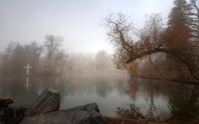 Картинка осень, деревья, туман, пруд, парк, камень