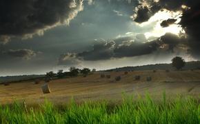 Обои поле, небо, трава, свет