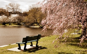 Картинка деревья, скамейка, пруд, парк, США, Boston, Massachusetts