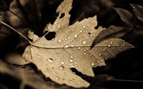 Картинка листья, капли, макро, природа, фон, листок