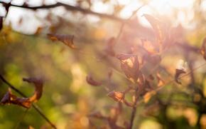 Картинка осень, листья, красиво, ярко