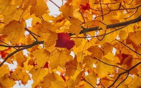 Картинка autumn, leaves, branches, fall