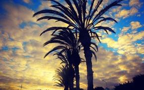 Картинка sky, tree, sun, Spain, beutiful, lanscape