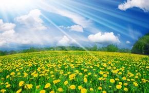 Обои лето, небо, свет, одуванчики, луг