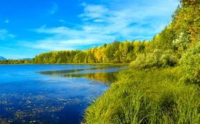 Обои сибирь, лес, река, трава, деревья, небо