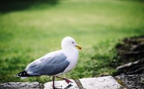 Обои перья, лапки, птица, чайка