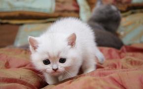 Обои кошка, кот, милый, крадется
