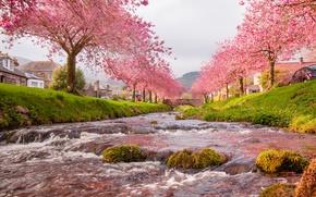 Обои небо, река, мост, деревья, цветы, весна