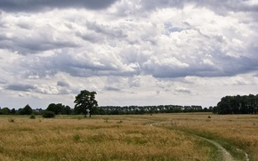Картинка поле, лето, облака