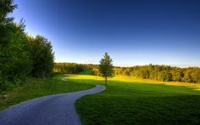 Картинка лето, деревья, трава, небо, природа