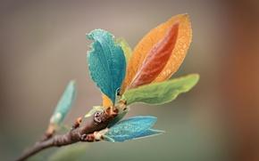 Картинка листья, макро, веточка, цвет, macro