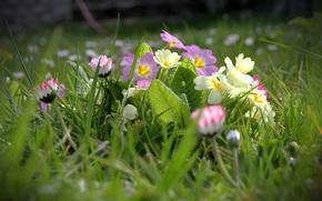 Картинка трава, цветы, весна, полевые
