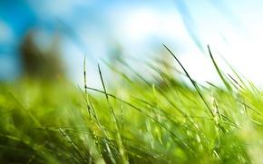 Обои Трава, зеленый, листья
