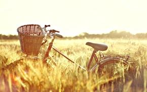 Картинка велосипед, широкоэкранные, bicycle, HD wallpapers, обои, пшеница, поле, рожь, полноэкранные, солнце, background, day, широкоформатные, настроения, ...