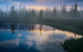 Картинка лес, отражения, туман, озеро, берег, Деревья