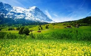 Картинка зелень, лес, трава, цветы, горы, поля, Швейцария, долина, ледник, домики