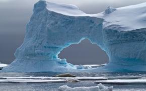 Обои crabeater seal, petermann island, iceberg, antarctica