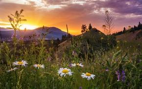 Обои закат, цветы, горы, ромашки, луг, Канада, Canada, British Columbia, Британская Колумбия, Kootenay National Park, Kootenay ...