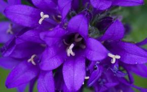 Картинка flower, nature, macro, bokeh