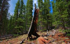 Обои лес, пейзаж, дерево, камень