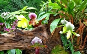 Картинка листья, линии, цветы, природа, краски