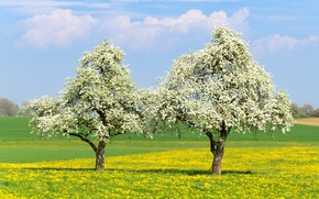 Картинка деревья, настроение, весна, цветение