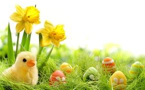 Картинка трава, цветы, яйца, весна, colorful, пасха, grass, flowers, нарциссы, spring, крашеные, eggs, easter, daffodils, springer, …