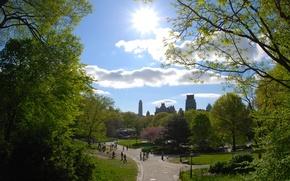 Картинка деревья, city, город, парк, тропинка, park, new york, usa, нью йорк, тропинки