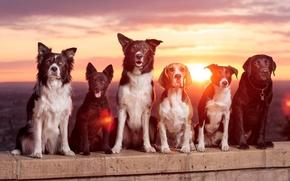 Картинка собаки, закат, друзья