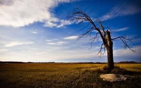 Обои дерево, небо, поле, облака