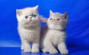 Обои дом, фон, кошки