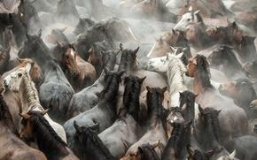 Картинка Лошади, стадо, мустанги, животные