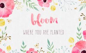 Картинка цветы, фон, краски, маки, акварель, фраза, цитата, вдохновение, мотивация, цвети, bloom