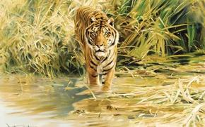 Картинка тигр, Donald Grant, Tiger, живопись, рисунок