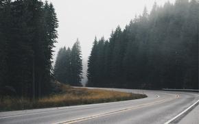 Картинка дорога, лес, асфальт, трасса, ель, ели, шоссе