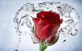 Картинка вода, макро, роза, бутон