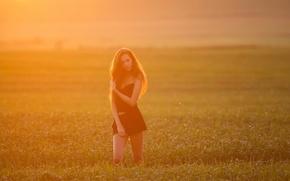 Картинка поле, девушка, утро, освещение, Влада