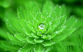 Картинка вода, капли, макро, роса, растение