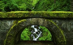 Картинка мост, природа, зеленый, заросли