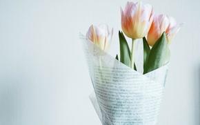 Обои тюльпаны, белый, розовый, букет