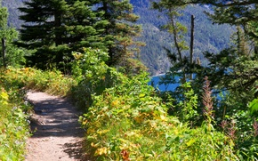 Картинка лес, природа, тропа, горное озеро, Path overlooking Bertha Lake in Waterton Lakes National Park